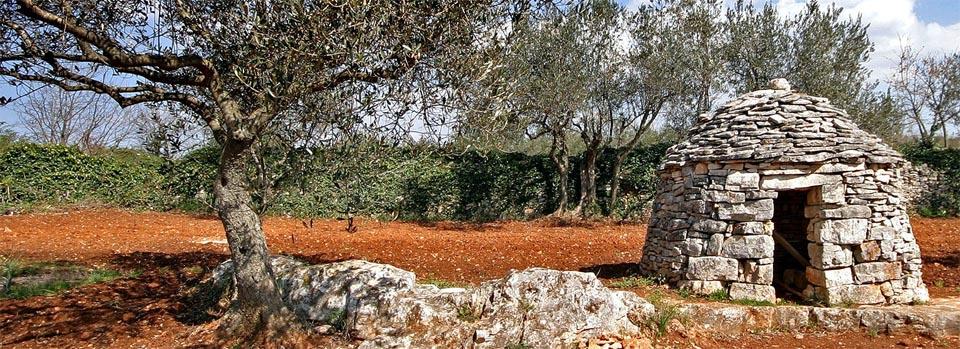 Хорватское оливковое масло PDO